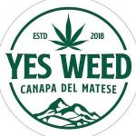 yes weed